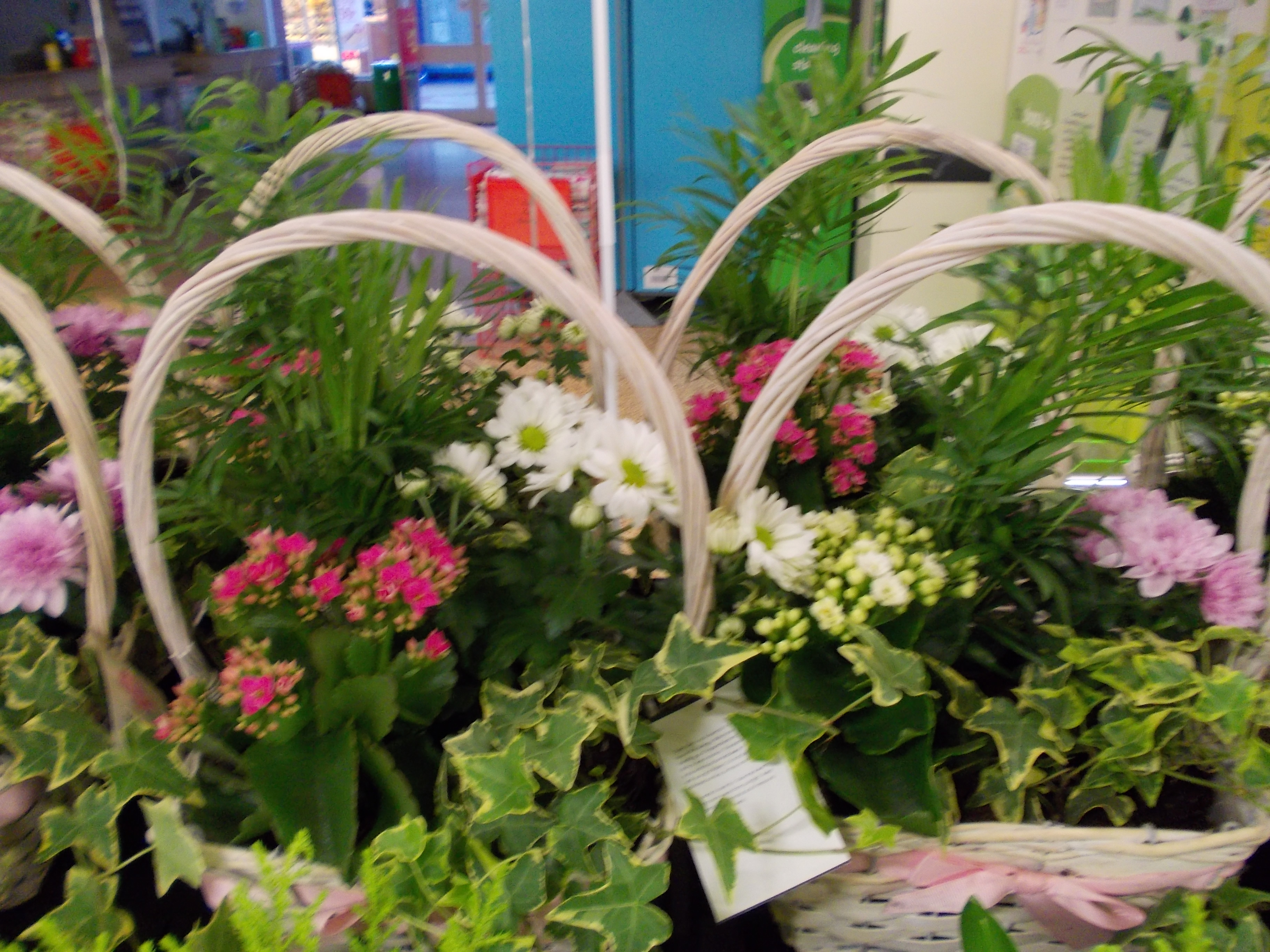 indoor plants asda gallery