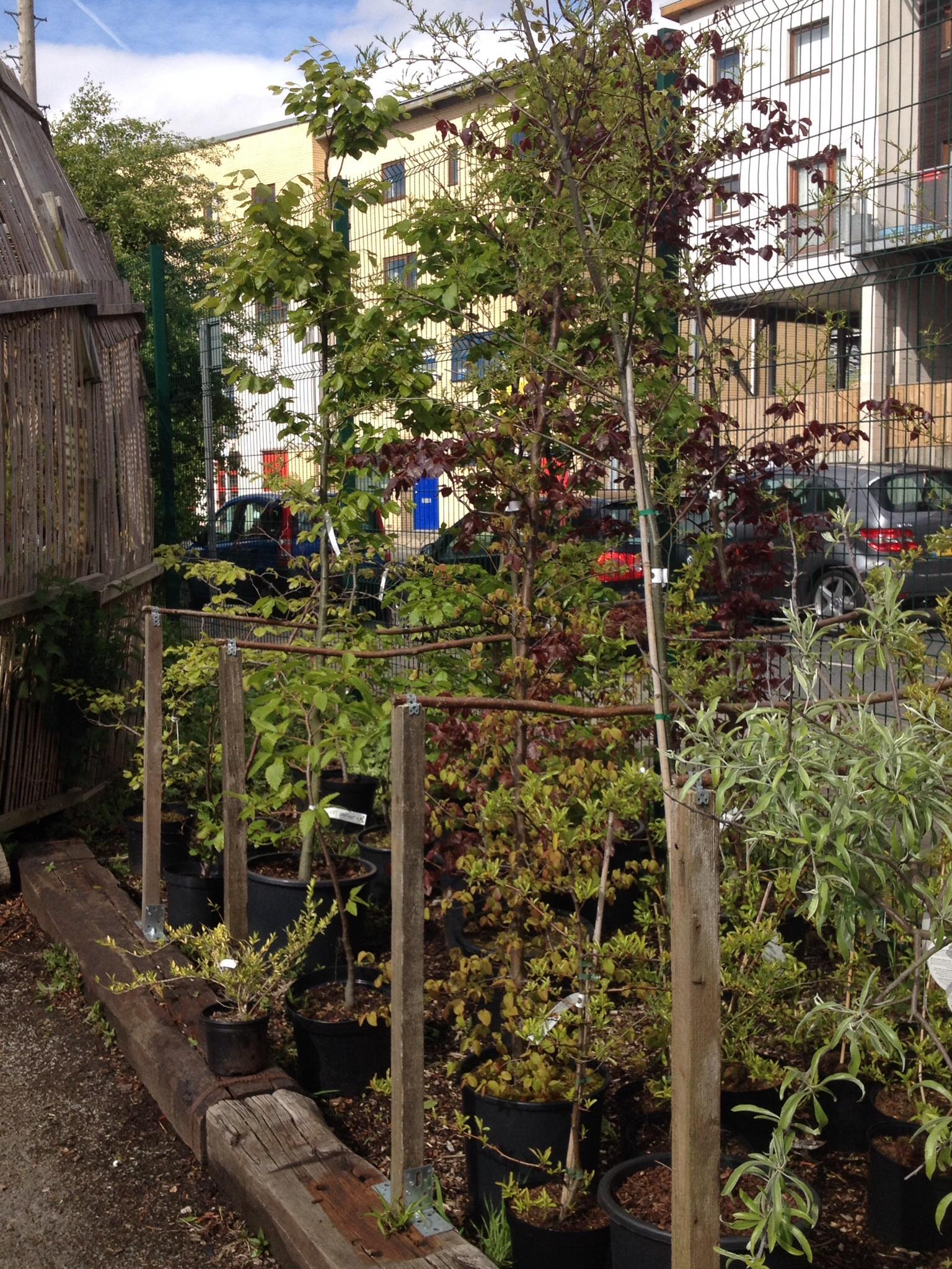 The Hulme Community Garden Centre…. | GHOSTLY TOM\'S TRAVEL BLOG…..
