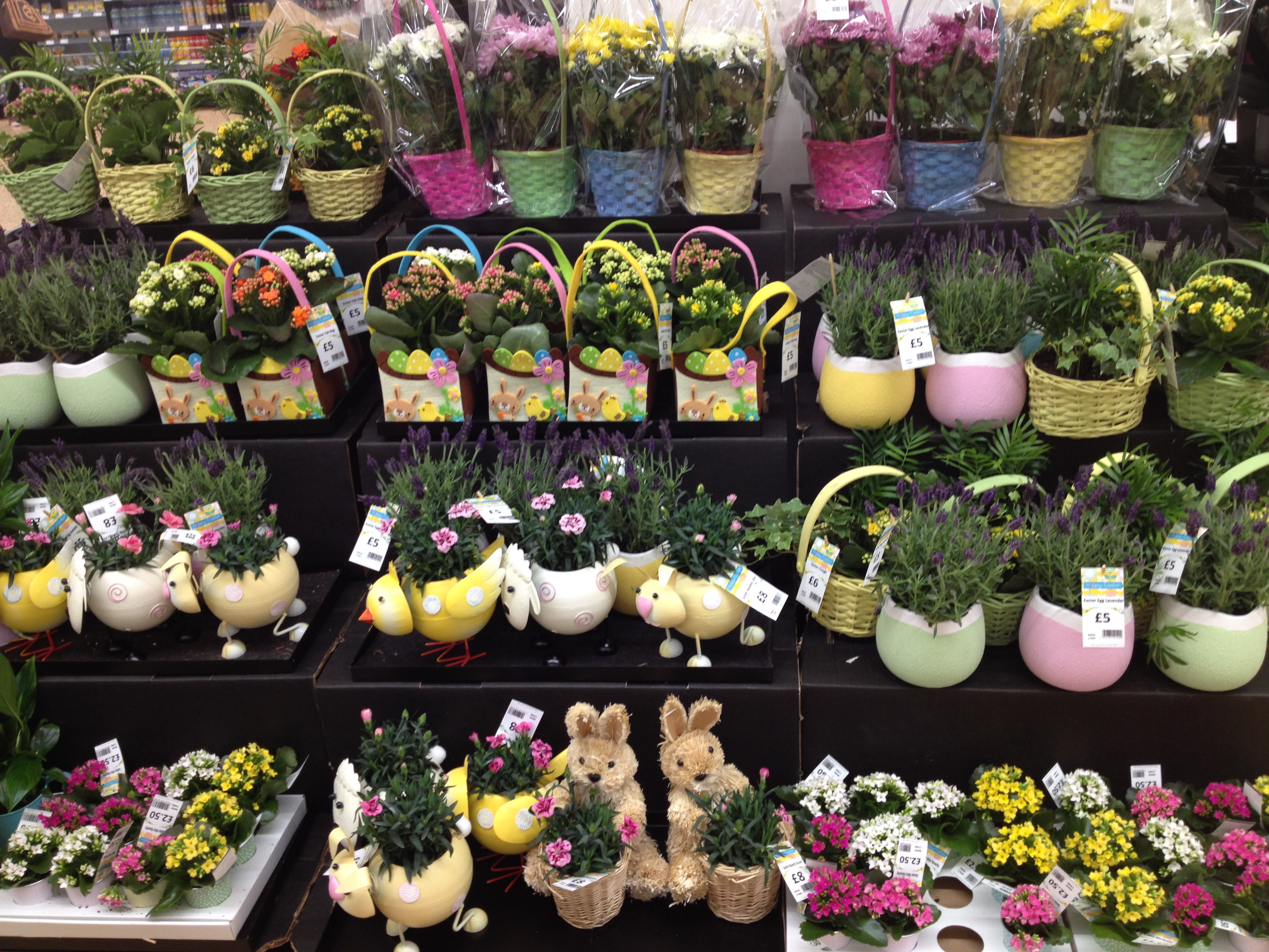 Easter asda ghostly toms travel blog im not sure how giving flowers and plants remembers the crucifixion of jesus christ but easter is a corruption of the word eostre which was the name negle Gallery